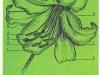 Строение цветка лилии