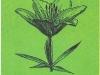 Чашевидная форма цветка
