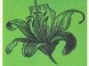 Воронковидная форма цветка
