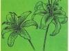 Звездчатая форма цветка