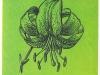 Чалмовидная форма цветка