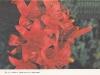 Зонтиковидно соцветие