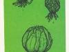 Строение луковицы концентрического типа