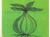 Строение луковицы с основными корнями