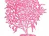 Брунфелъзия чашевидная