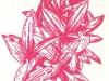 Сеткреазия пурпуровая